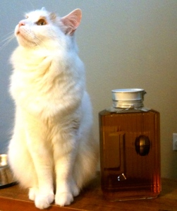 Cat next to iced tea bottle